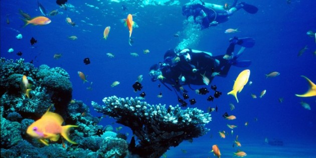 Things to do in Costa Rica - Scuba diving / Snorkeling